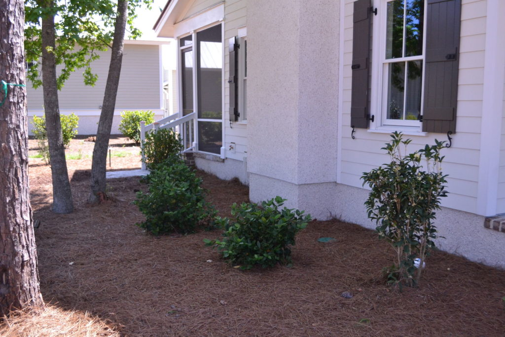 Bluffton, SC Cottage Driveway and Full Yard Landscape 3