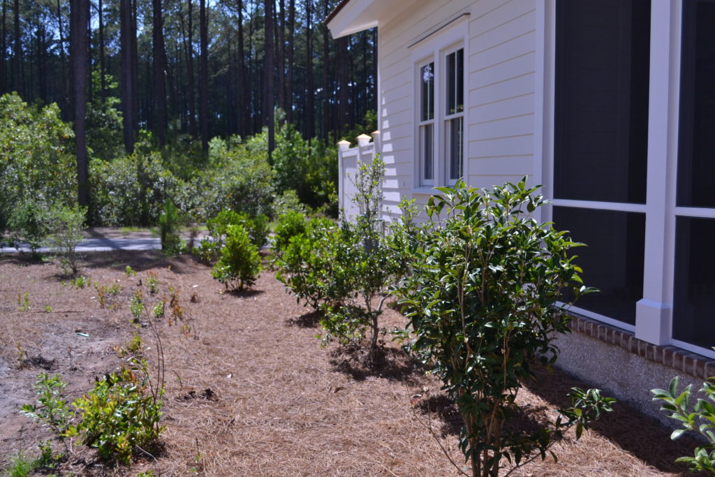 Bluffton, SC Cottage Driveway and Full Yard Landscape 2