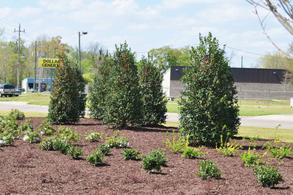 Streetscape & Planting Design Project Along Sand Bar Ferry Road 10
