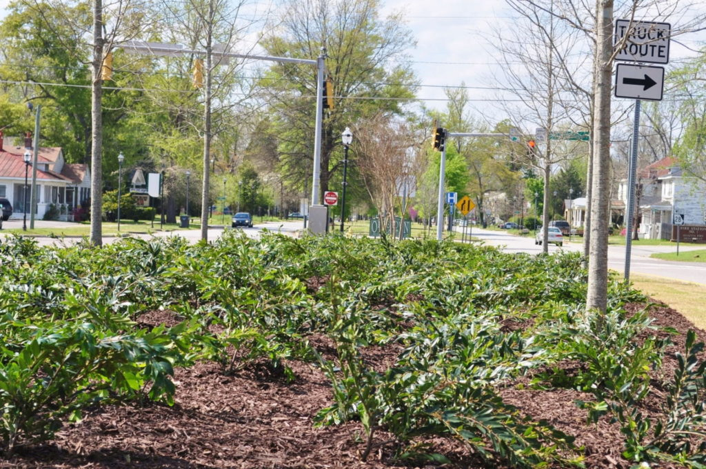 Streetscape & Planting Design Project Along Sand Bar Ferry Road 18