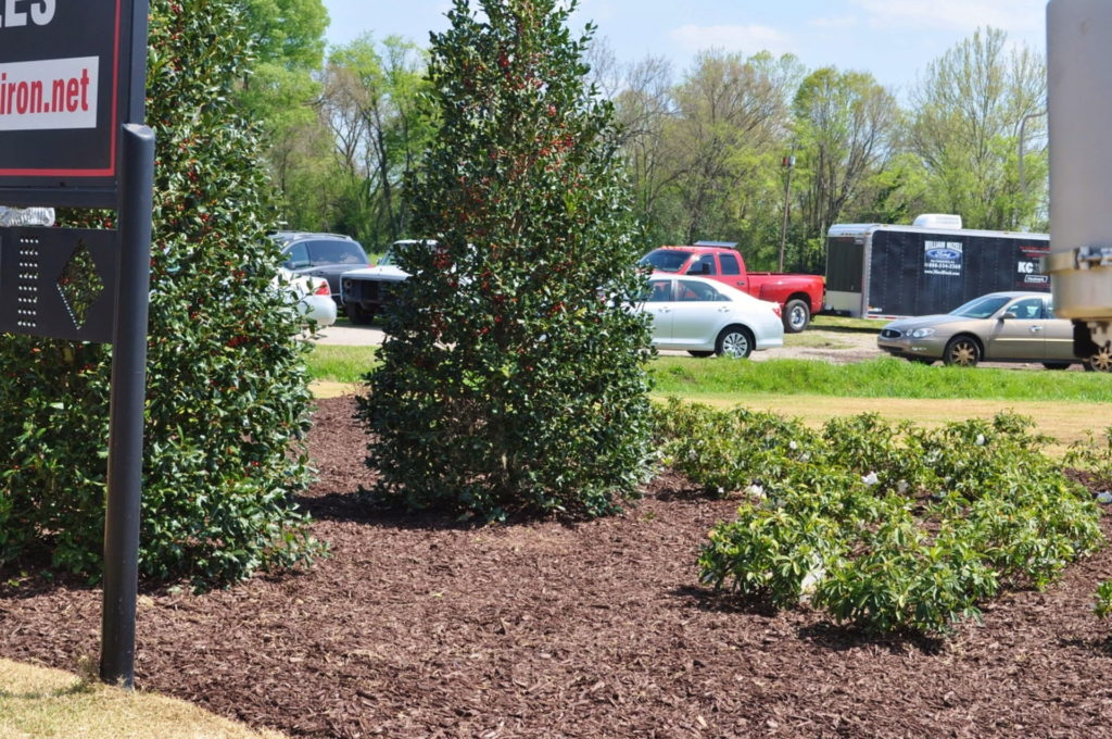 Streetscape & Planting Design Project Along Sand Bar Ferry Road 2