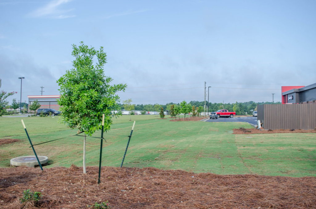 North Augusta, SC Wendy's Franchise Landscaping Project 1