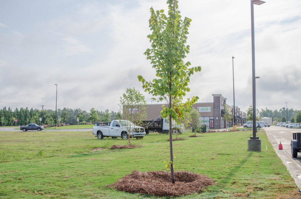 North Augusta, SC Wendy's Franchise Landscaping Project 15