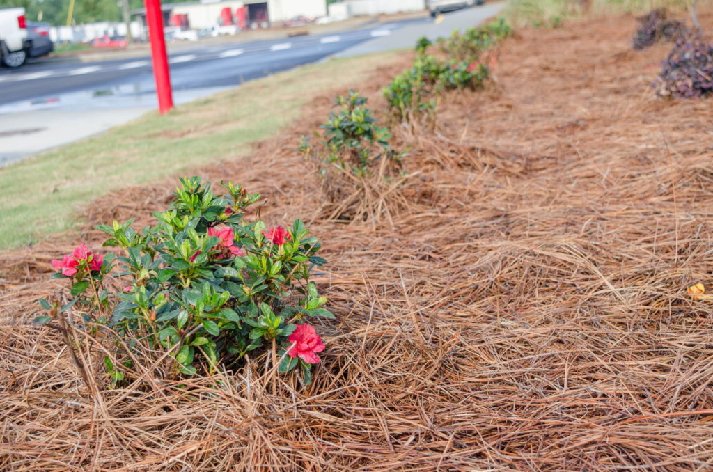 North Augusta, SC Wendy's Franchise Landscaping Project 16