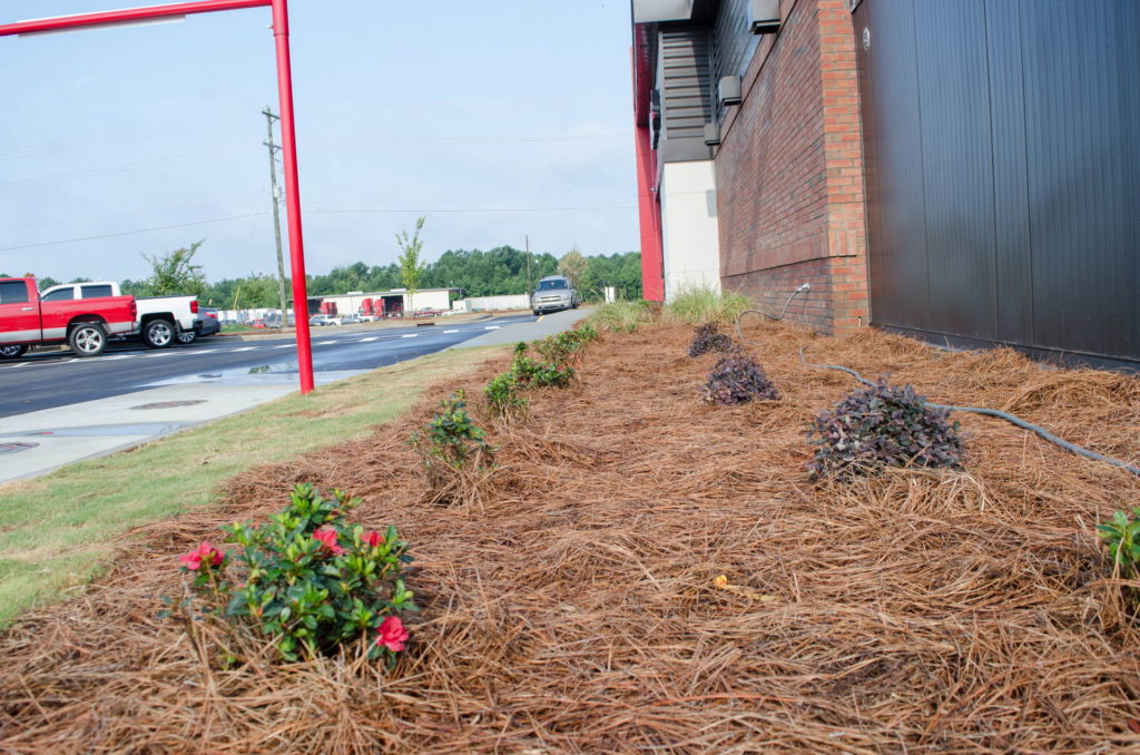 North Augusta, SC Wendy's Franchise Landscaping Project 18
