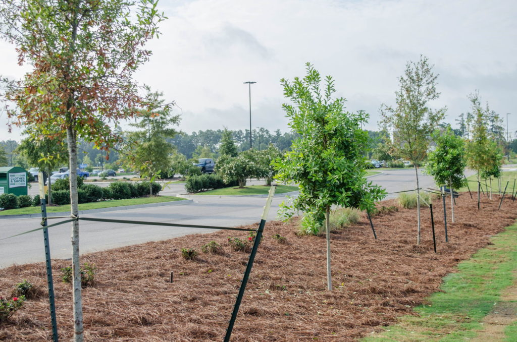 North Augusta, SC Wendy's Franchise Landscaping Project 19