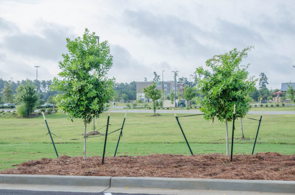 North Augusta, SC Wendy's Franchise Landscaping Project 9