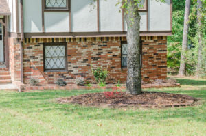 5 Tips for Landscaping Around Trees 2
