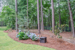 5 Tips for Landscaping Around Trees 1