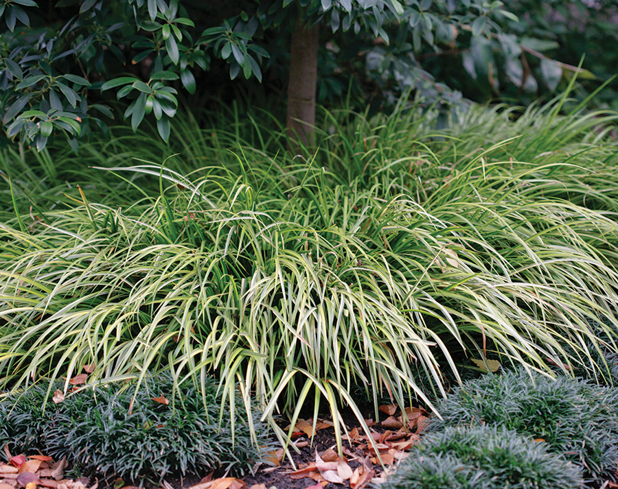 5 Awesome Plants Native to Bluffton, SC 1