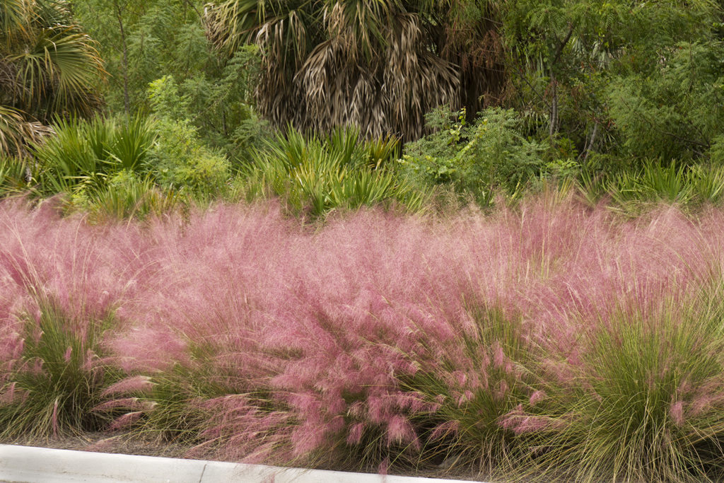 5 Awesome Plants Native to Bluffton, SC 4