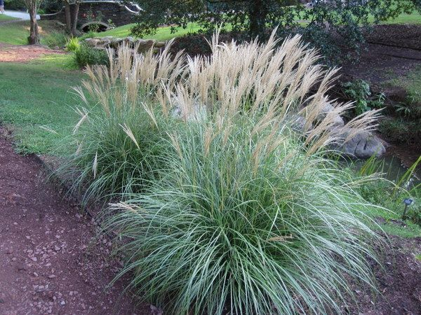 5 Awesome Plants Native to Bluffton, SC 3