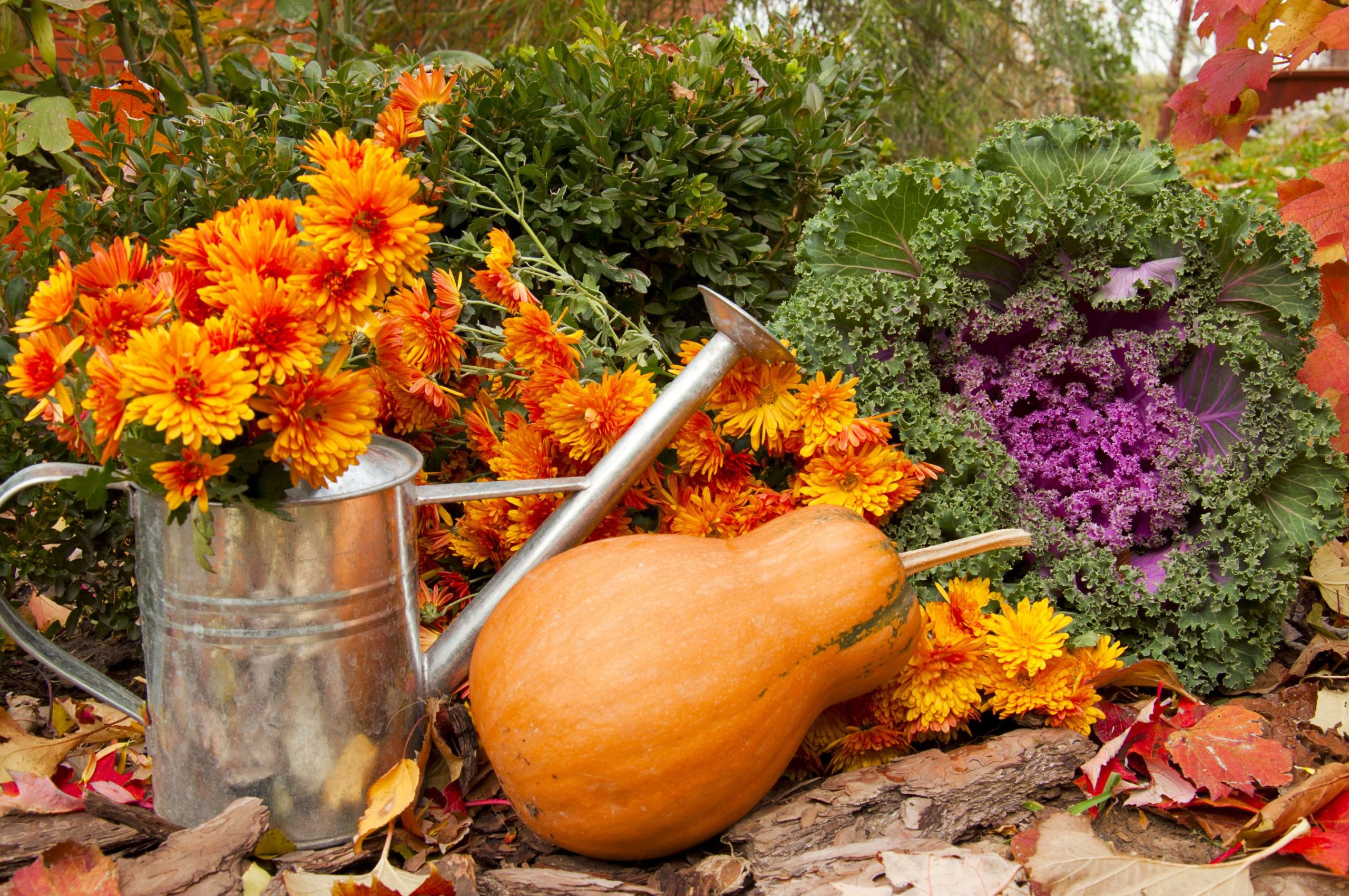 What to Plant in Your Garden This Fall 4