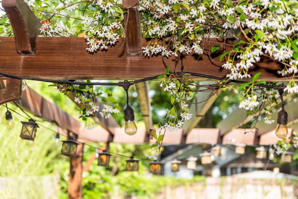 How to Create Privacy in Your Outdoor Space 2
