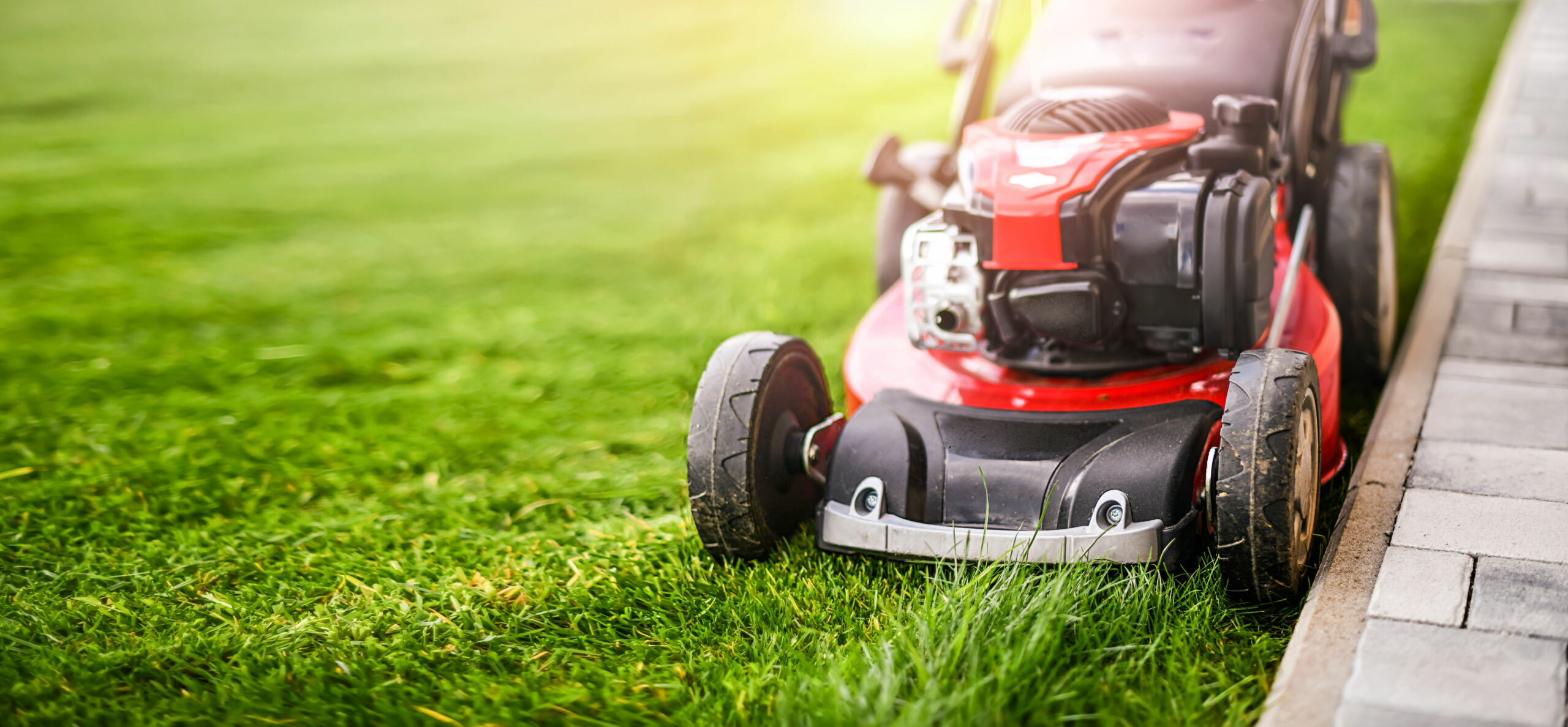 How Often Should I Mow the Lawn? 1