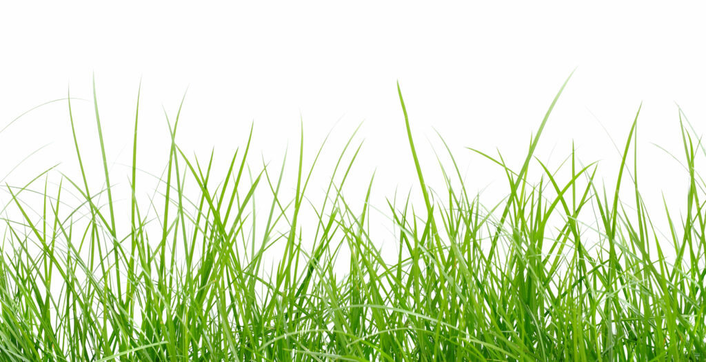 How Often Should I Mow the Lawn? 2